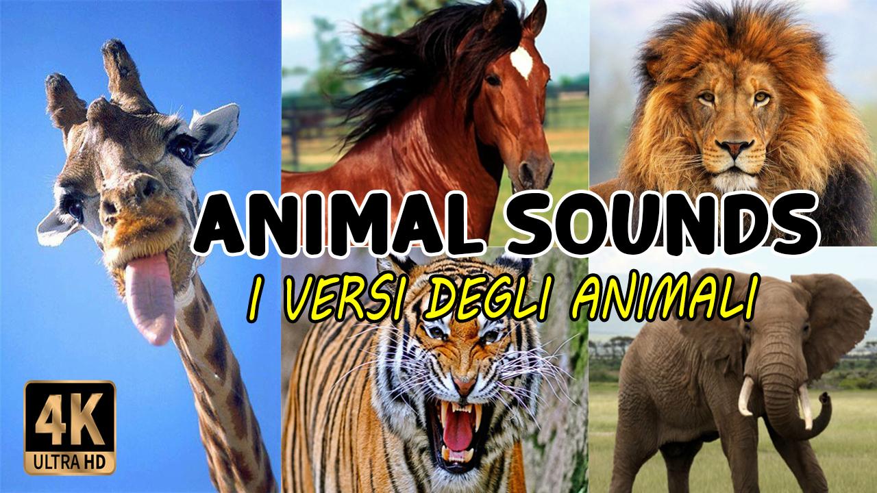 I versi degli animali | Animal sounds and names