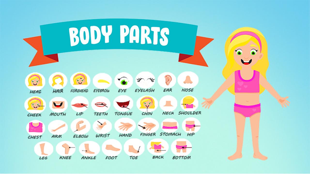Le parti del Corpo in inglese
