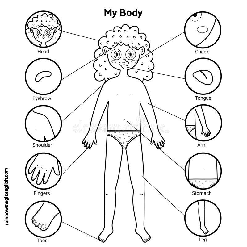 Coloriamo e impariamo le parti del corpo in inglese