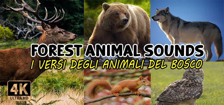 I versi degli animali del Bosco