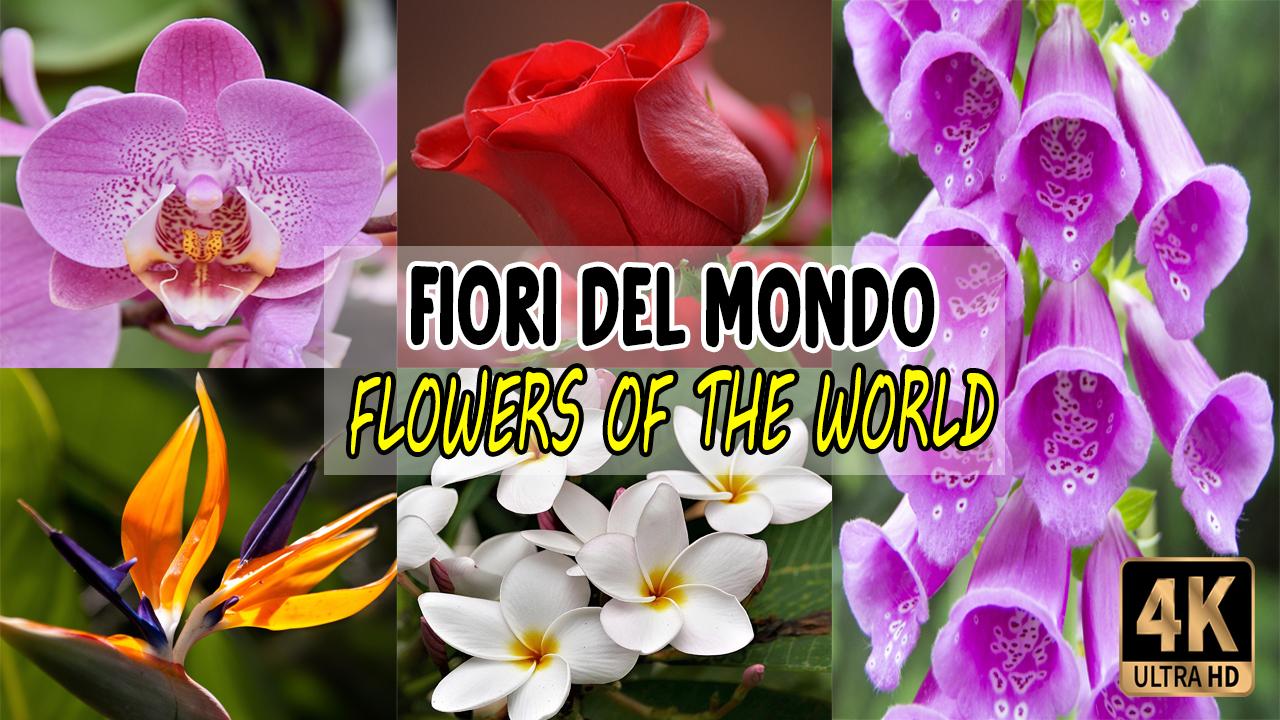 I fiori del mondo