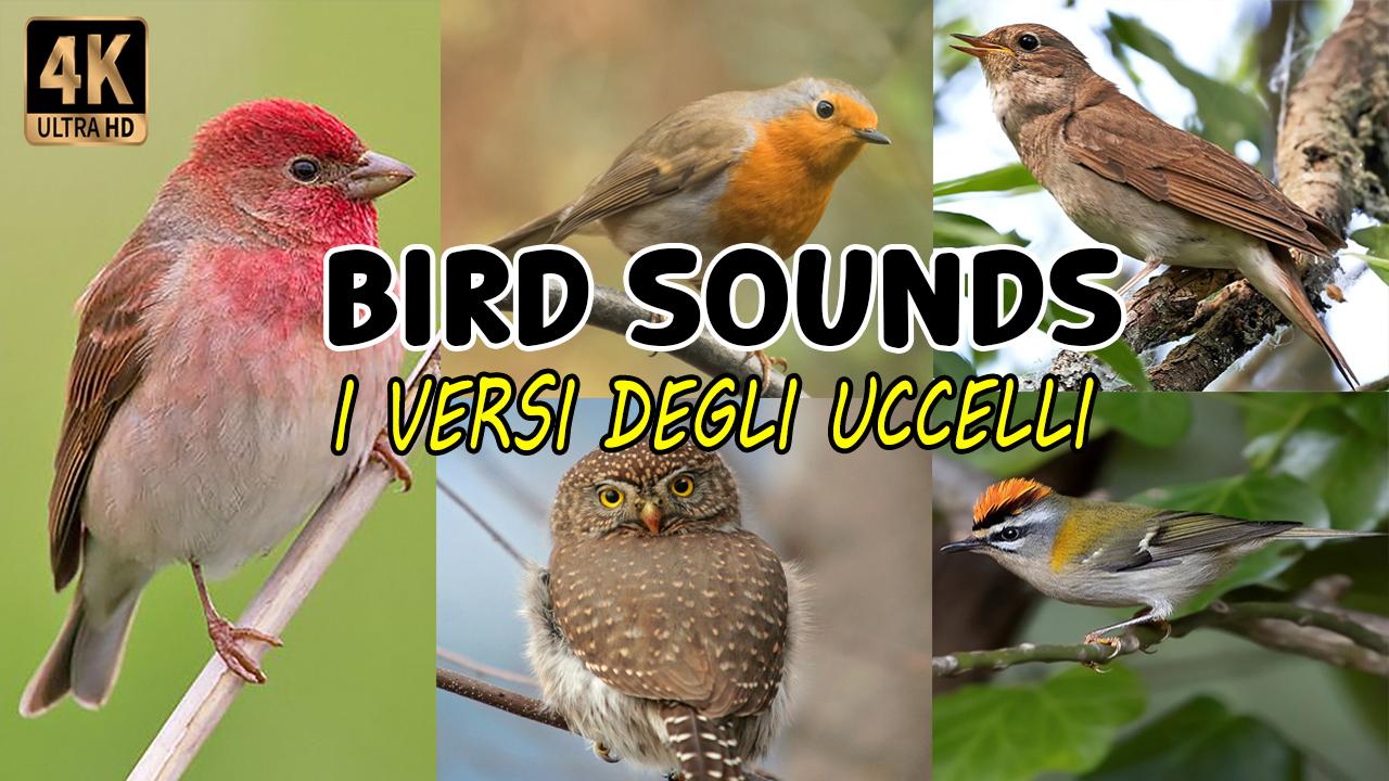 I versi degli uccelli | Bird sounds