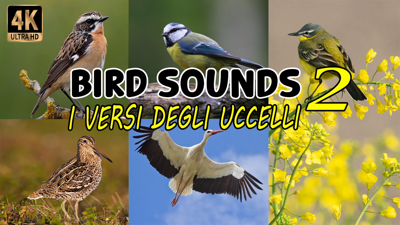 I versi degli uccelli 2 | Bird sounds 2