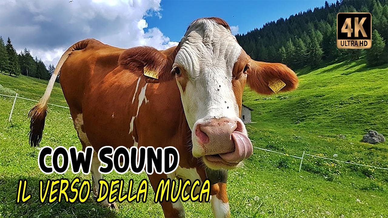 Il verso della Mucca   Cow Sound