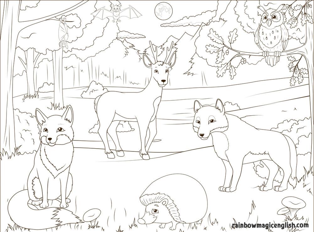 Animali del bosco da colorare
