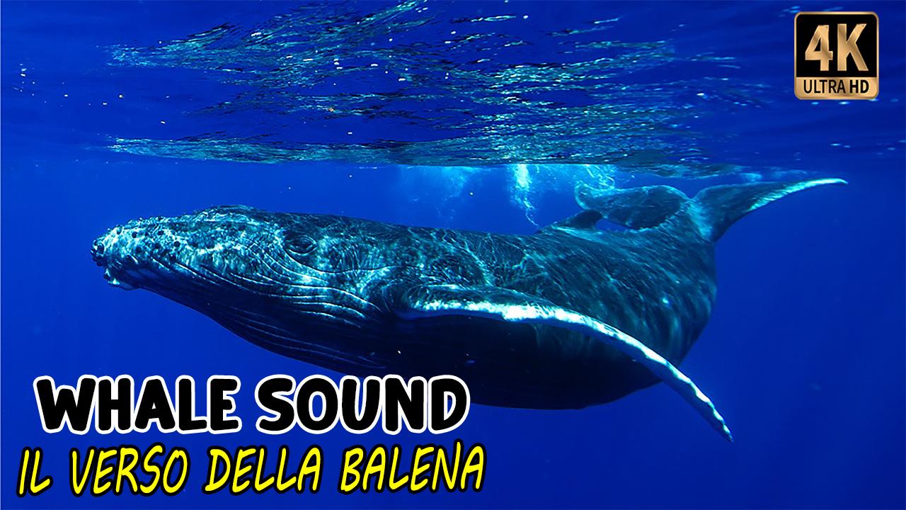 Il Verso della balena   Whale Sound