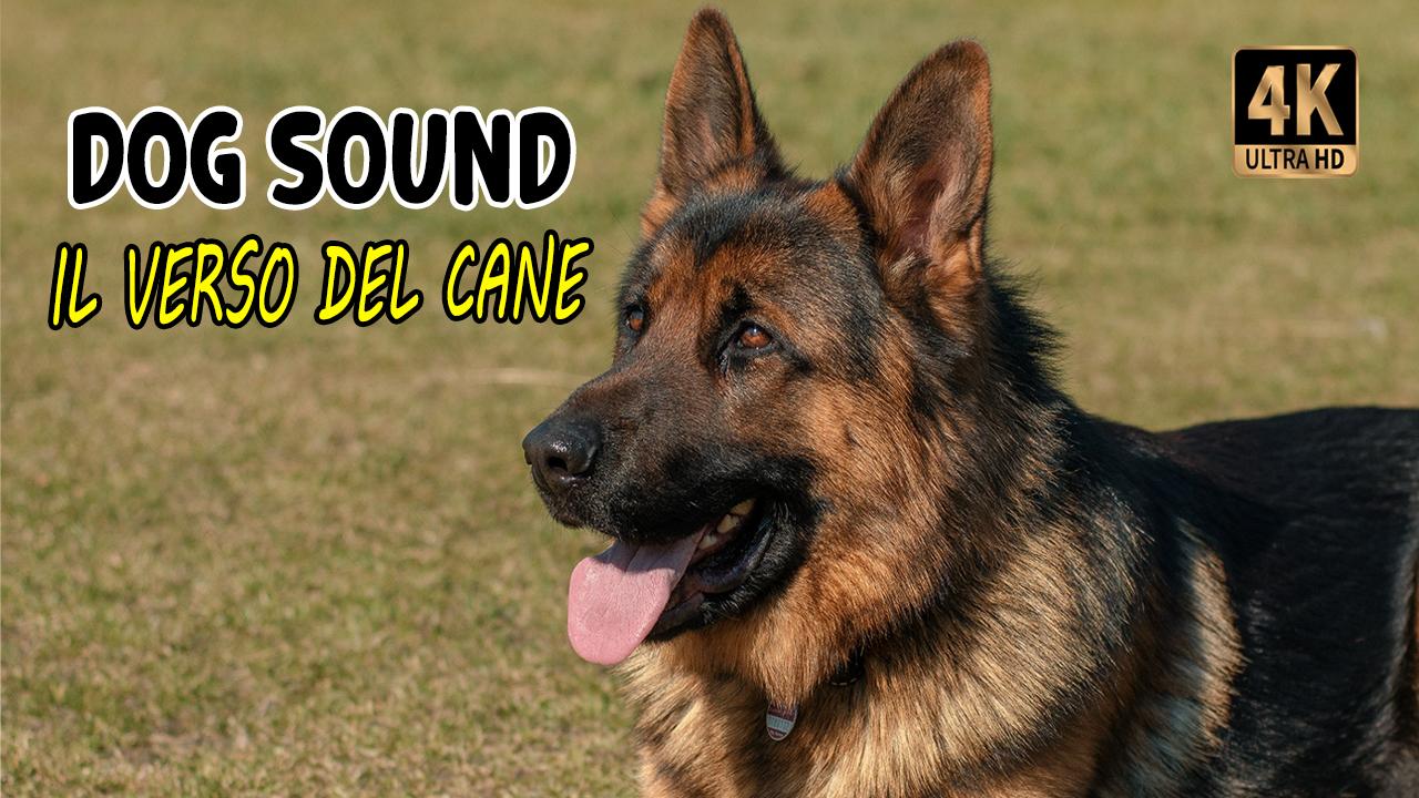 Verso del cane che abbaia | Dog barking sound