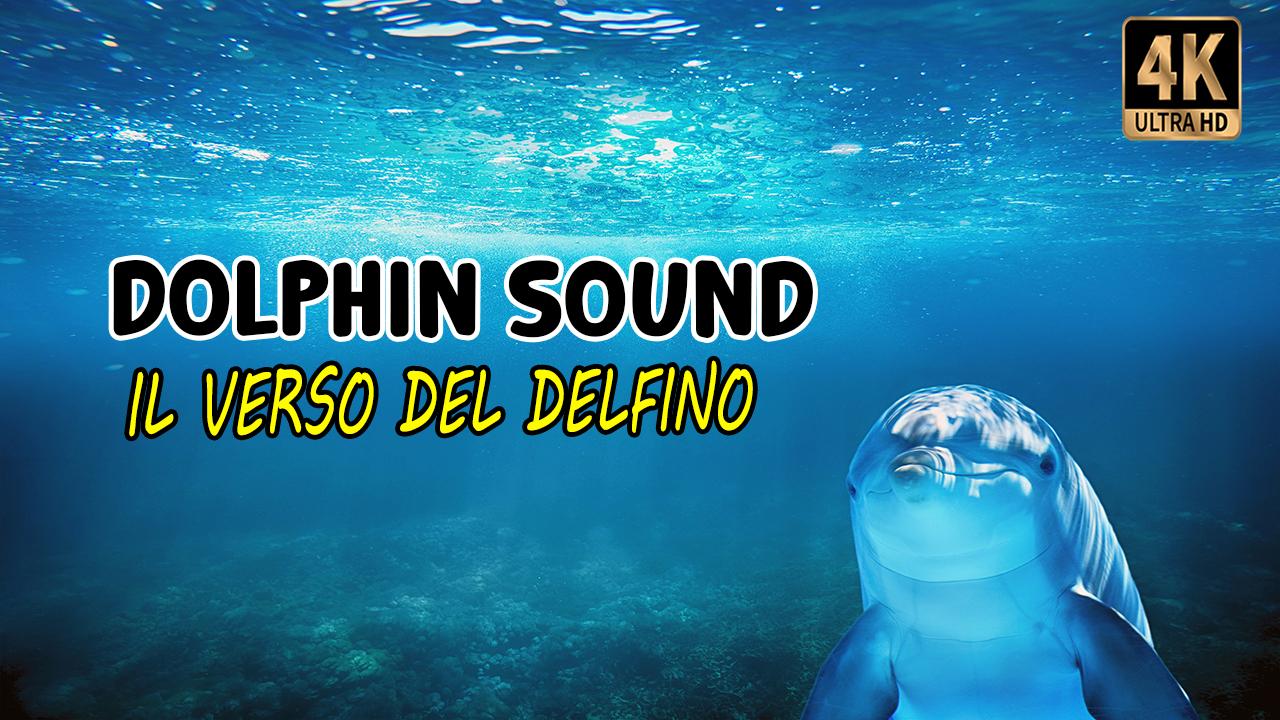 Il Verso del delfino | Dolphin Sound