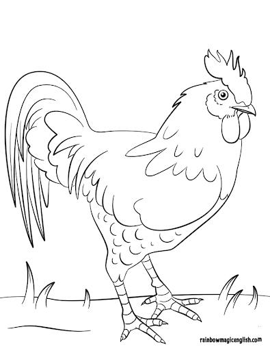 Disegni gallo da colorare e stampare