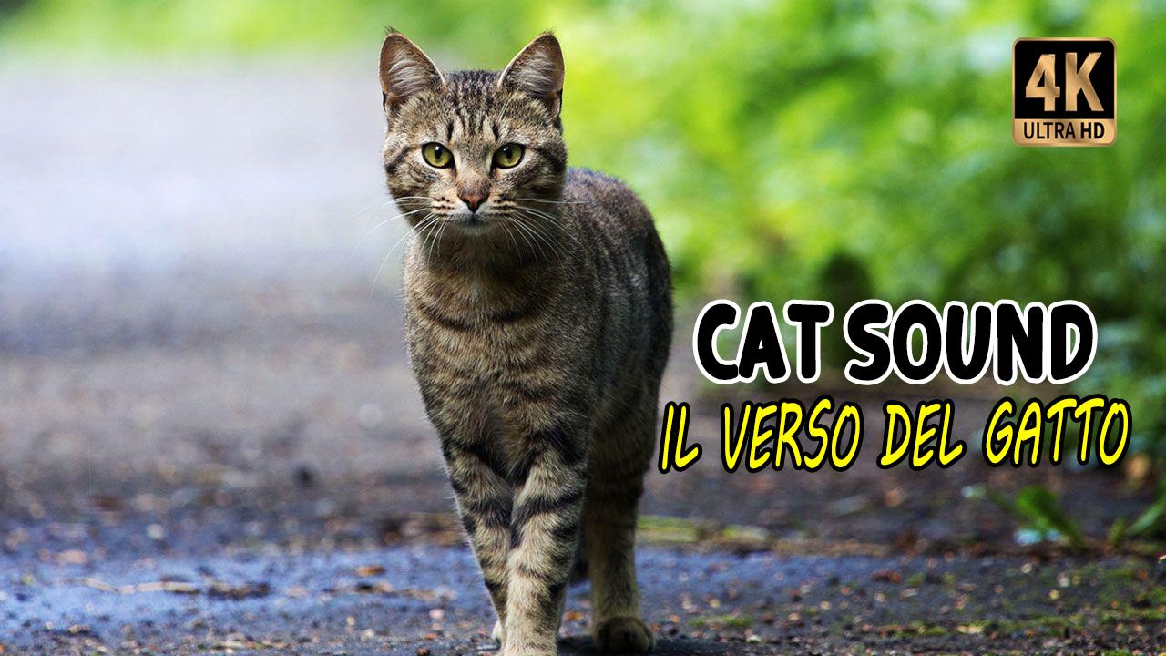 Verso del gatto | Cat Sound
