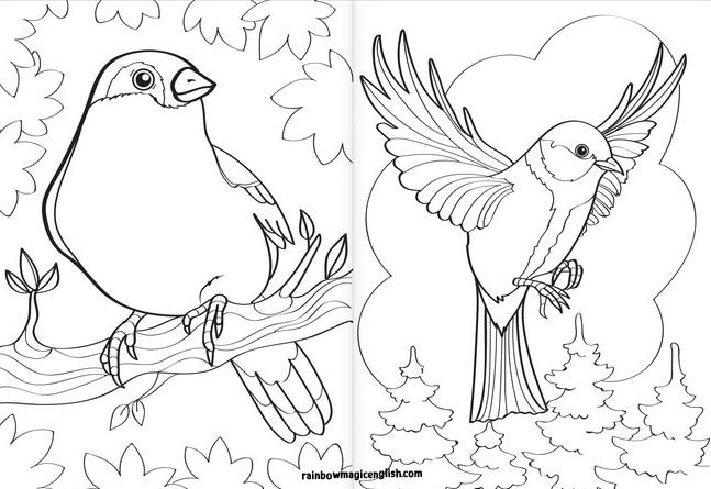 Uccelli disegni da colorare e stampare