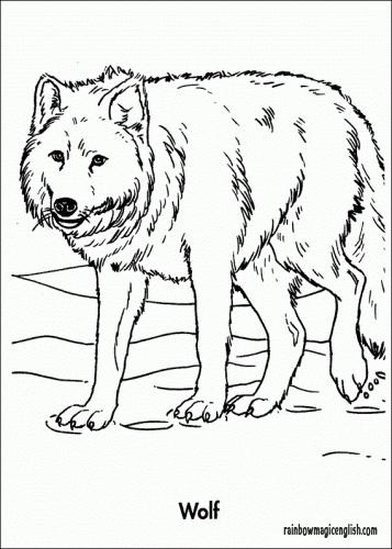 Lupo: disegni da colorare e stampare