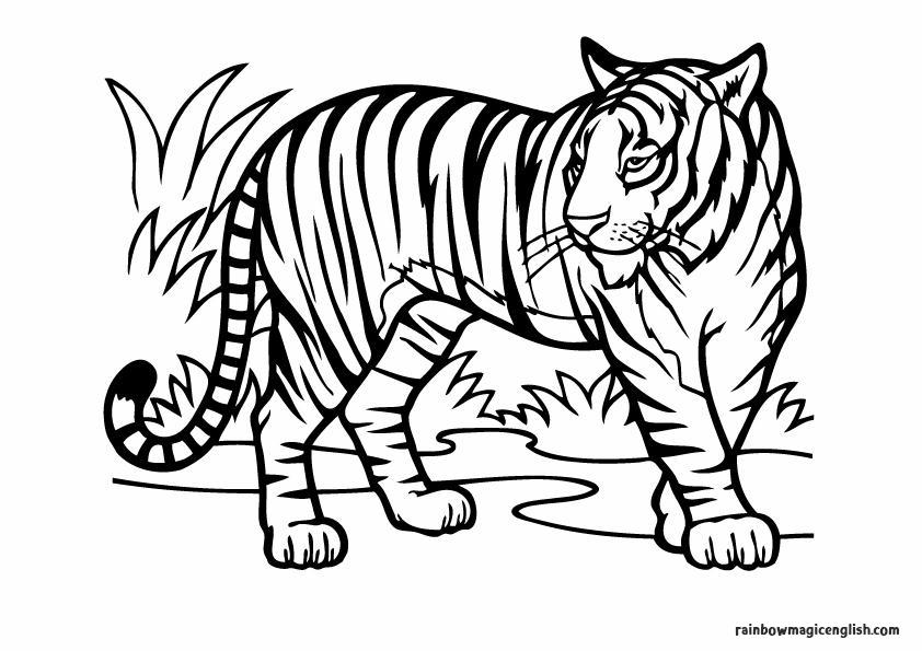Tigre da colorare e stampare