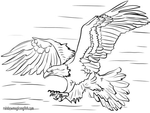 Aquila: disegni da stampare e colorare